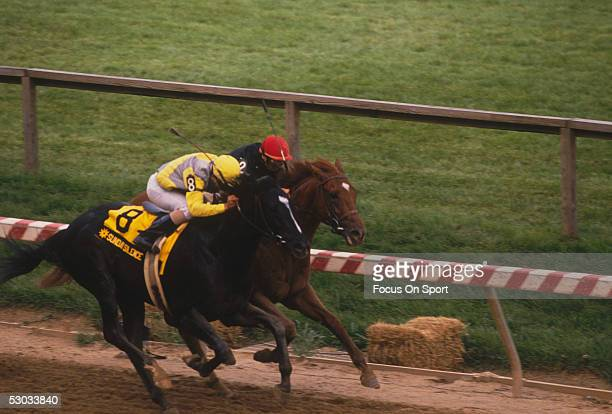 Sunday Silence races with jockey Pat Valenzuela against Easy Goer before Sunday Silence won the 1989 Preakness Stakes in Baltimore Maryland