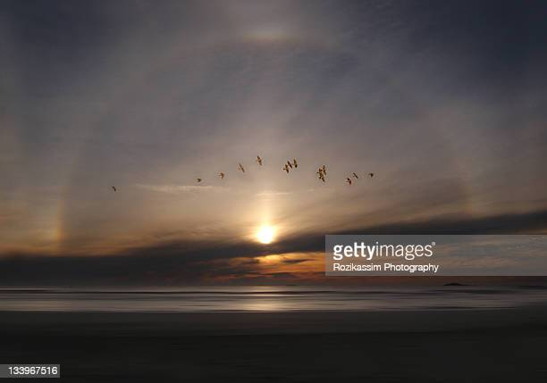 sundog phenomenon with birds flying in sky - light natural phenomenon stock pictures, royalty-free photos & images