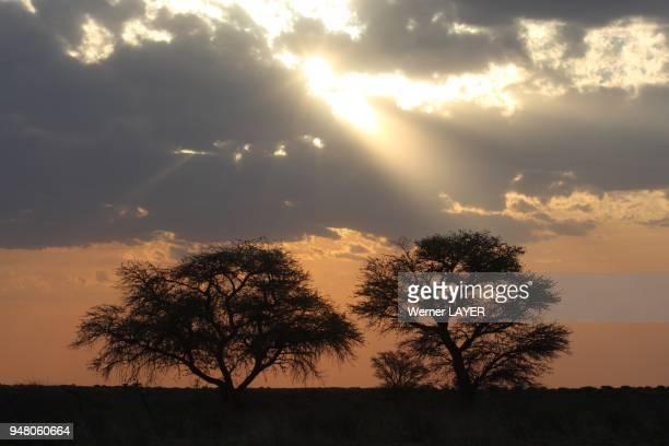 Sundown in the Kalahari