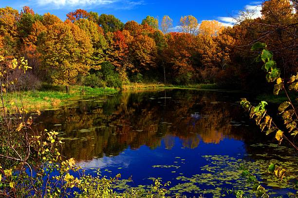 sunfish lake dakota county delaware avenue fall color reflected in pond
