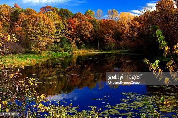 Sunfish Lake Dakota County Delaware Avenue fall color reflected in pond