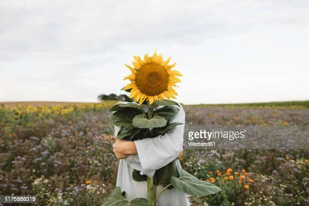 sunflower covering face of a boy in a field - groß stock-fotos und bilder