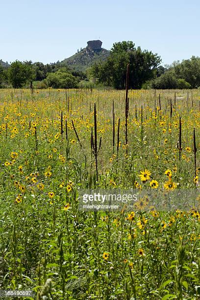sunflower field and castle rock colorado vertical - castle rock colorado stock pictures, royalty-free photos & images