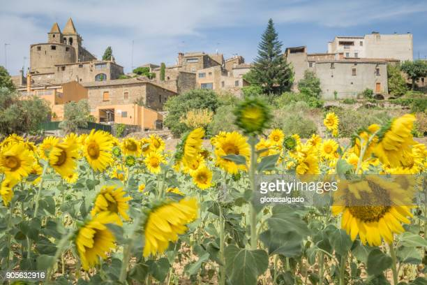 Sunflower field and medieval village, Catalonia, Spain