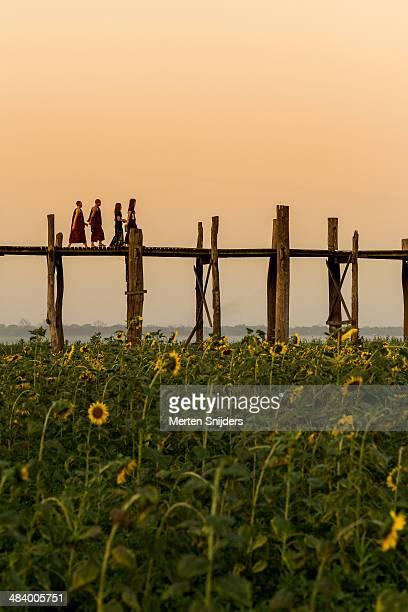 sunflower field below u bein bridge - merten snijders stock pictures, royalty-free photos & images