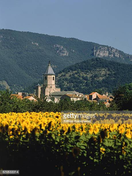 Sunflower field with look at village with church tower, Nantes, France