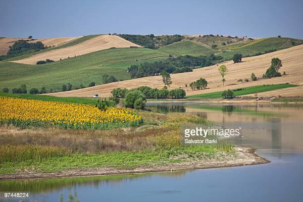 sunflower fields - テキルダー ストックフォトと画像