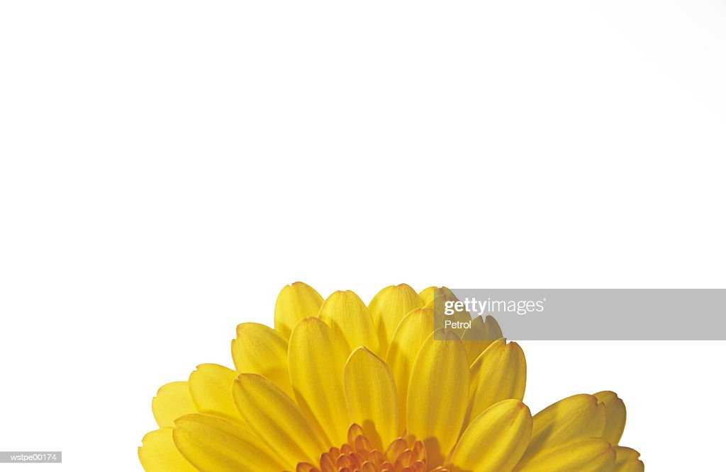 Sunflower, part of : Foto de stock