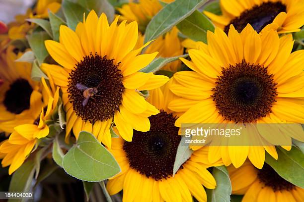 sunflower with bee - arrangement stock pictures, royalty-free photos & images
