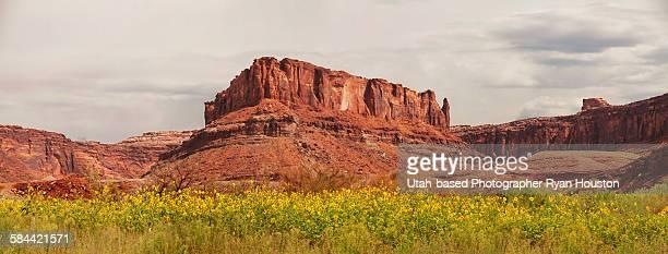 Sunflowers along Colorado River