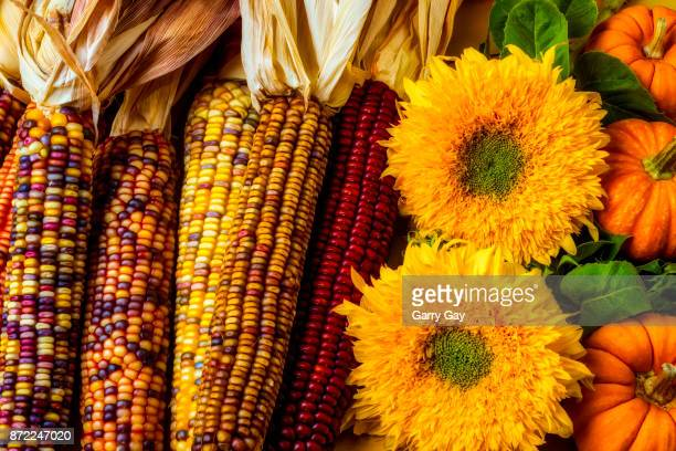 Sunflowers And Indian Corn