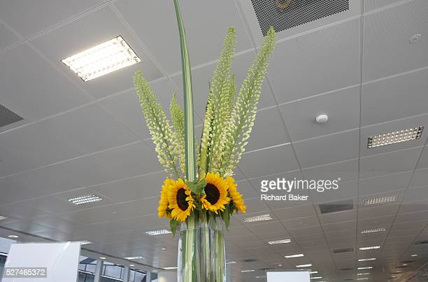 Sunflowers apparently trigger subliminally happy emotions heightening feelings of life satisfaction and positive social behavior In an open plan...