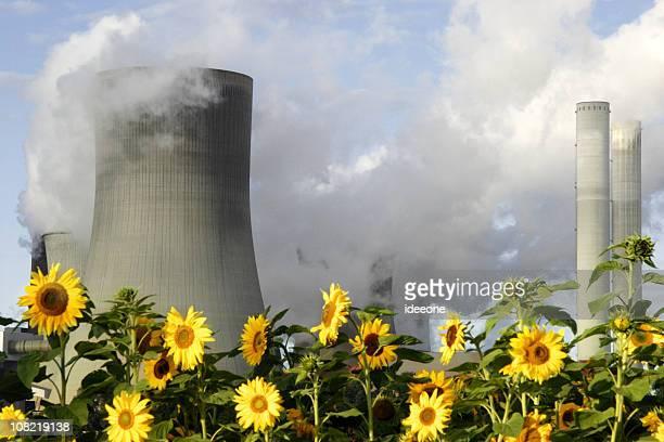 Sonnenblumen neben Smokestacks