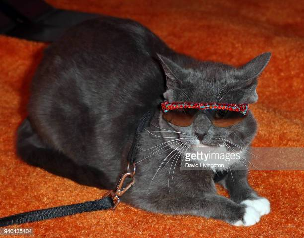 Sunglass Cat aka Bagel attends the 6th Annual Rock Against MS benefit concert and award show at the Los Angeles Theatre on March 31 2018 in Los...