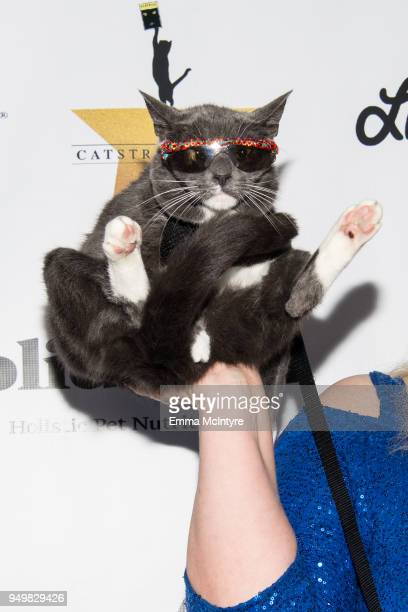 Sunglasses Cat' attends 'CATstravaganza featuring Hamilton's Cats' on April 21, 2018 in Hollywood, California.