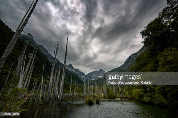 sunked larchs forest of lagoon alerces under dramatic sky with patagonian andes. - espiritualidad stock pictures, royalty-free photos & images