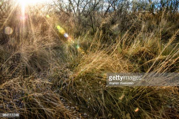 sun-kissed - weinstein stock pictures, royalty-free photos & images