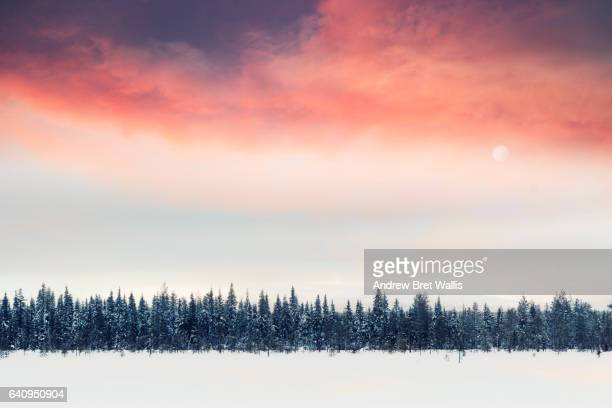 Sunlight above winter fir trees in lapland, Finland.