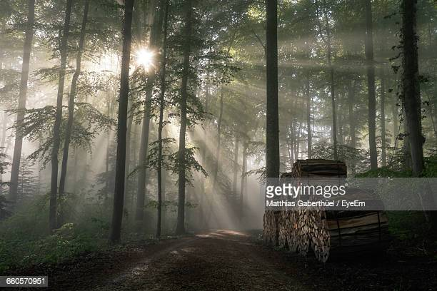sunlight beaming through forest trees - matthias gaberthüel stock pictures, royalty-free photos & images