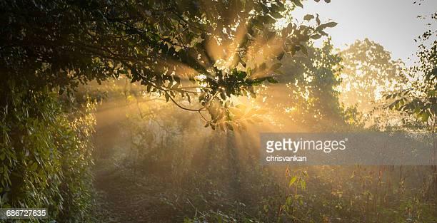Sunlight beaming through trees, Enschede, Overijssel, Netherlands