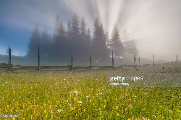sunlight behind trees at sunrise - anton petrus stock pictures, royalty-free photos & images