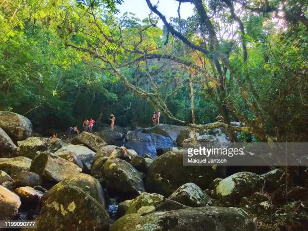 sunlight between the trees near a waterfall in a tropical forest - bromeliaceae stock pictures, royalty-free photos & images