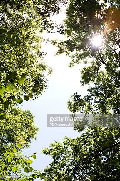 Sunlight breaking through trees in forest