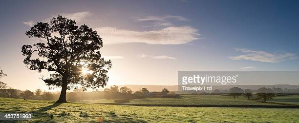 Sunlight bursting through oak tree