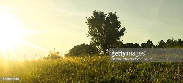 sunlight coming over field against sky - alpes maritimes stock pictures, royalty-free photos & images