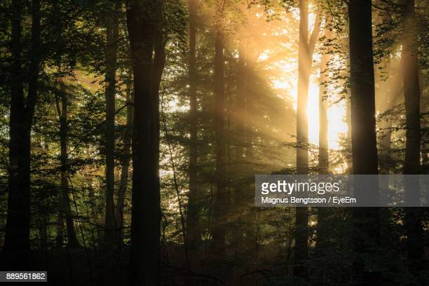 Sunlight Falling On Trees In Forest