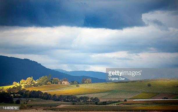 sunlight falling on winery vineyards - dandenong stock photos and pictures