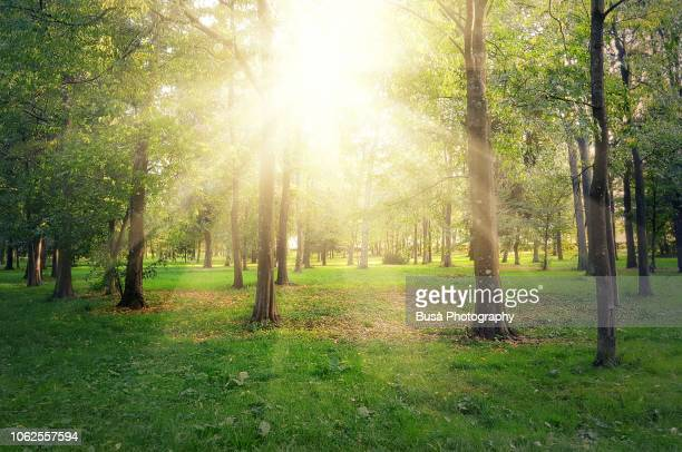 Sunlight filtering through trees in autumn in the Cascine Park in Florence, Italy