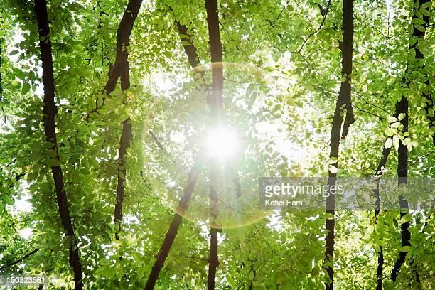 sunlight filtering through trees in forest