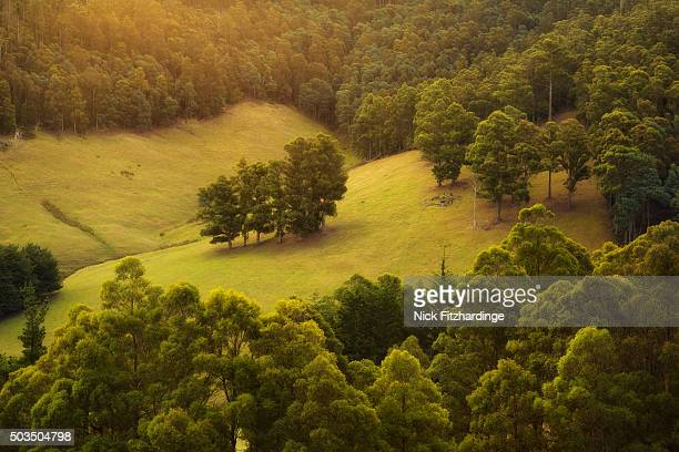 Sunlight filters down into a field surrounded by forest, Lucaston, Tasmania, Australia