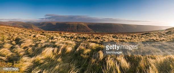 Sunlight flaring over golden grassland