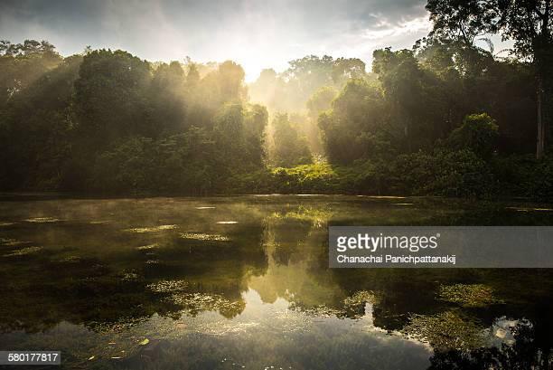 sunlight in misty forest at mcritchie reservior - gegenlicht stock-fotos und bilder