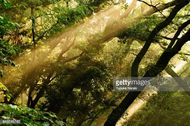 Sunlight in misty forest