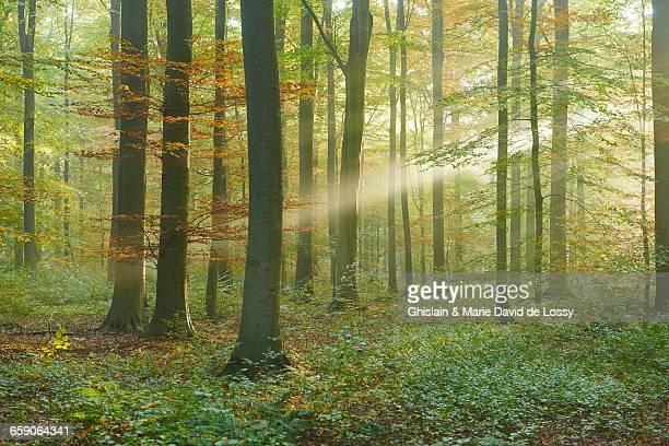 Sunlight in Sonian Forest, Brussels, Belgium