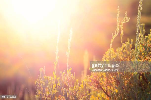 sunlight on flower plants - janessa stock pictures, royalty-free photos & images