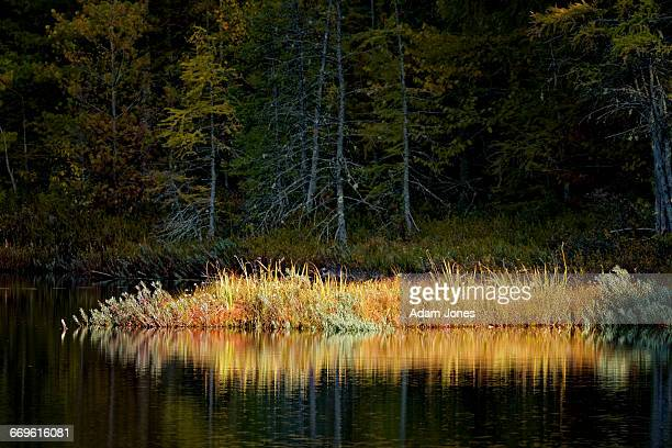 sunlight on grass along red jack lake - hiawatha national forest stock pictures, royalty-free photos & images
