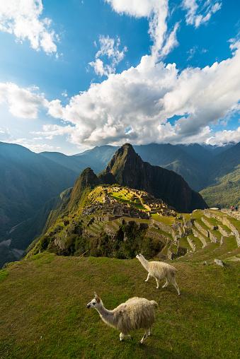 Sunlight on Machu Picchu, Peru, with llamas 490426646