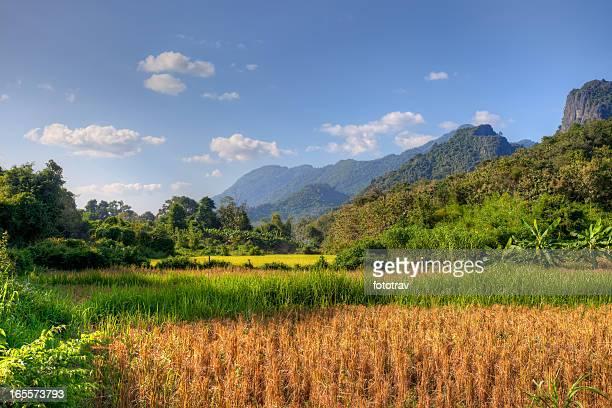Sunlight on paddy field in Laos
