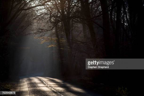 Sunlight on tree lined road, Birdlip, UK