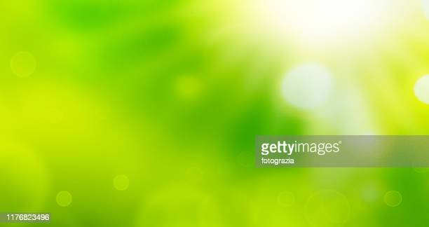 sunlight over abstract natural background - 緑色 ストックフォトと画像