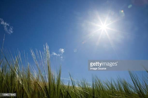Sunlight over long grass