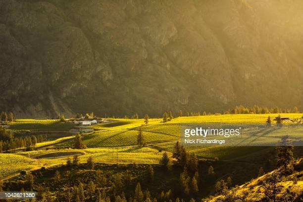 sunlight over vineyards of the okanagan valley, okanagan falls, british columbia, canada - british columbia stock pictures, royalty-free photos & images