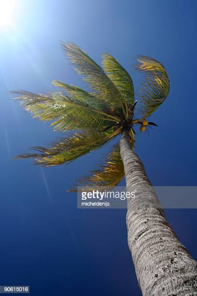 Sunlight Palm Tree