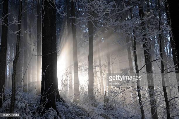 Echar un vistazo a la luz del bosque en invierno
