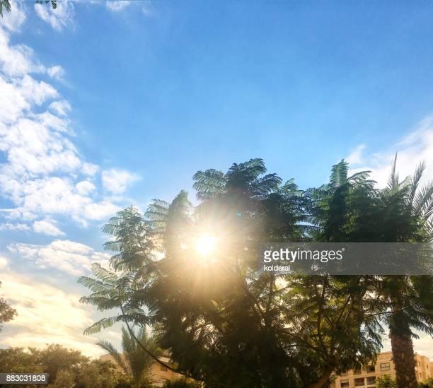 sunlight penetrating through trees - penetracion fotografías e imágenes de stock
