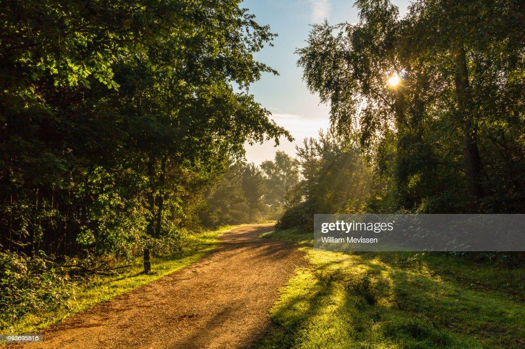 Sunlight : Stockfoto